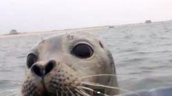Questa foca non ha paura degli