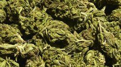 Uruguay, la liberalizzazione della marijuana una manna per il