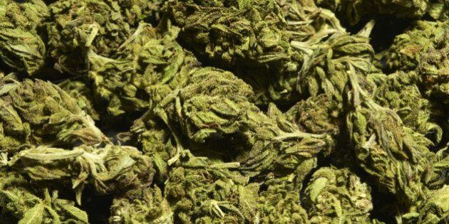 Uruguay, la liberalizzazione della marijuana spiazza i narcotrafficanti e diventa un business per il...