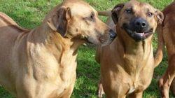 Forza Italia propone una legislazione per creare i cimiteri degli animali