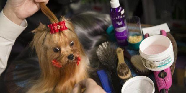 Westminster Kennel Club Dog Show: il concorso canino più importante di New York e degli Usa