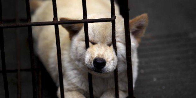 Cina, la carne di cane divide la campagna dalla città. I cittadini la contestano e dicono no alla