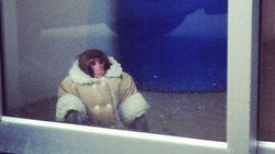 Scimmia con cappottino invernale persa all'Ikea
