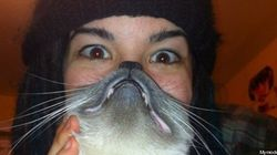 Cat beard: la moda virale della