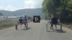 Corse clandestine ad Avezzano, riprese e postate su Youtube