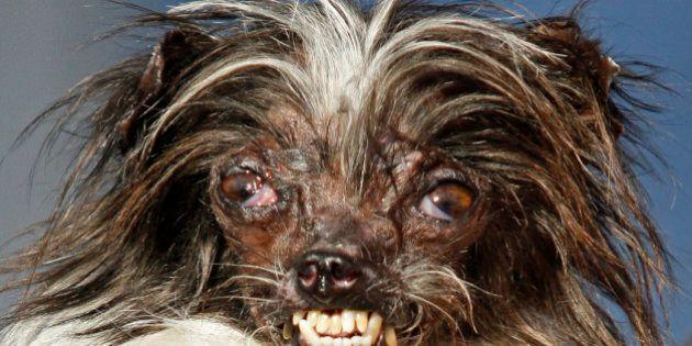 Peanut il cane più brutto del mondo: subì ustione da cucciolo. Tutti i protagonisti del concorso