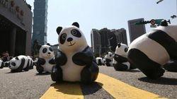 1600 panda invadono Hong Kong per l'ultima tappa del Pandas World