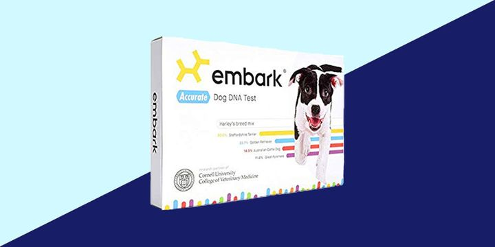 "I preferred <a href=""https://fave.co/2DqcziQ"" target=""_blank"" rel=""noopener noreferrer"">Embark&rsquo;s DNA test</a> for the detailed breed information, dog tag and section about &ldquo;relatives&rdquo;."