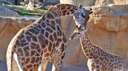 Cuccioli d'Europa: un tour tra gli zoo più belli