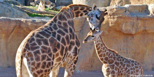 Zoo più belli d'Europa: un tour virtuale da Vienna a Edimburgo