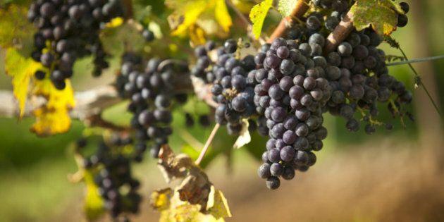 L'inutile trafila burocratica che sta soffocando il vino