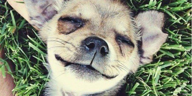 FOTO Cani e gatti: i cuccioli più condivisi del web