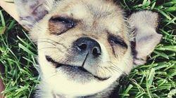 I cuccioli più condivisi del web