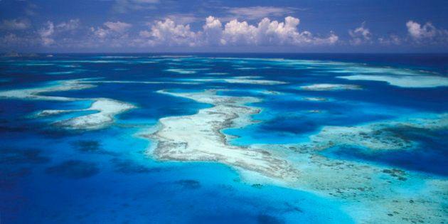 I coralli dei Caraibi a rischio estinzione entro 20 anni. L'allarme lanciato dall'Onu