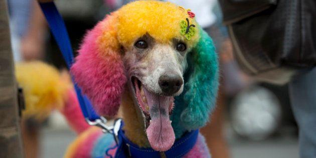 Carnevale di Rio De Janeiro 2014: anche gli animali partecipano alla festa. Cani e gatti in maschera