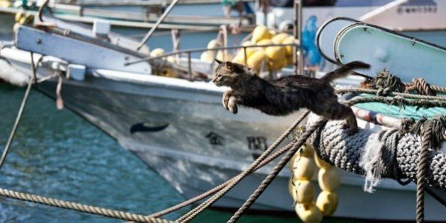 Tashirojima: l'isola dove ci sono più gatti che pescatori. Prima combattevano i topi ora sono un talismano