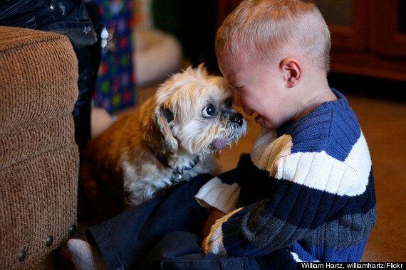 Animali, 9 lezioni vita che possono dare agli esseri umani