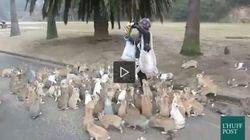 Un mucchio di conigli accoglie i turisti (VIDEO,