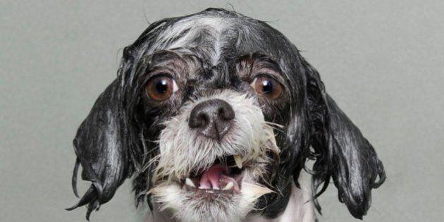 Cani che fanno il bagno.