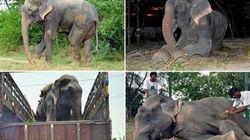 L'elefante piange