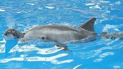 I primi respiri di un adorabile delfino (FOTO E