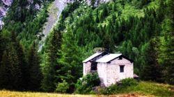 Il libro verde dei boschi