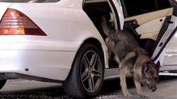 Il cane Gunther fa lo spot per il resort degli oligarchi
