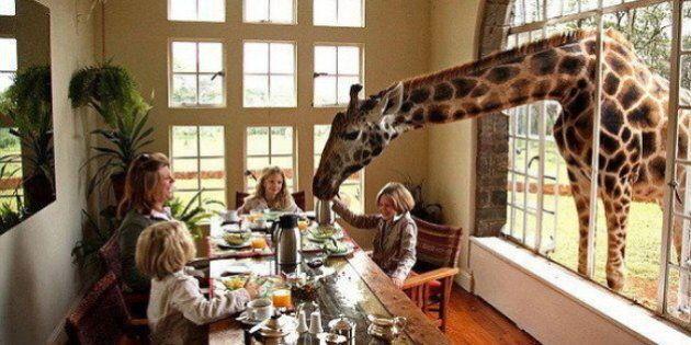 Hotel, i più strani del mondo. Dal Giraffe Manor in Kenya al Desert Lotus della