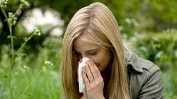 Il ritorno delle allergie. E tu di che pianta sei?