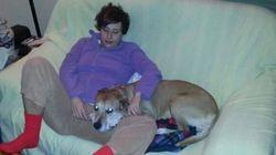 Soppresso Excalibur, il cane dell'infermiera contagiata da