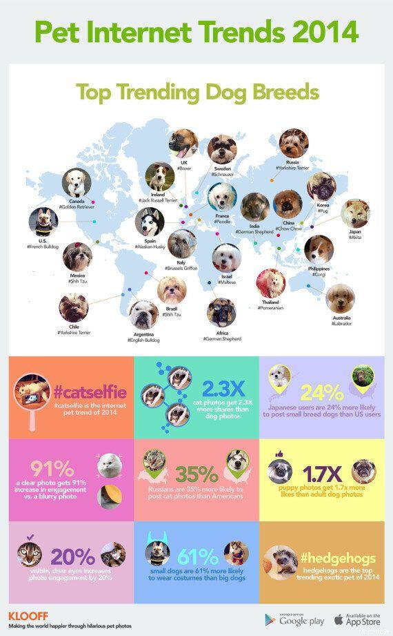 Cani, la mappa delle razze più amate per ogni nazione: in Italia vince il Brusseles Griffon (INFOGRAFICA,
