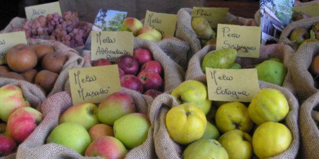 Dall'azzeruola all'uva spina la riscoperta dei frutti dimenticati fra Emilia Romagna e