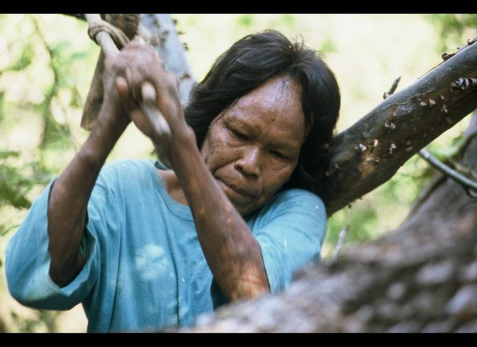 "Ibore, a Totobieogosode woman, using a traditional axe to open a beehive for honey, Paraguay. <a href=""http://www.survivalint"