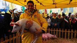 Allevatori portano maiali davanti al Parlamento