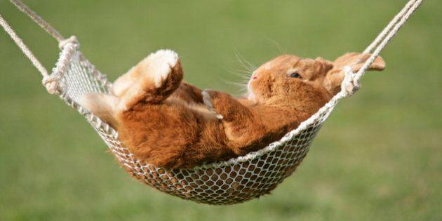 Salviamo i conigli dalla padella. La petizione: facciamoli diventare animali d'affezione come cani e...