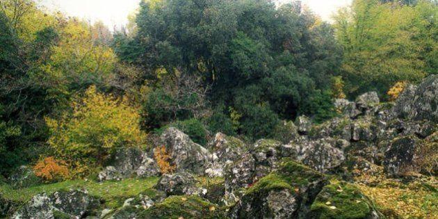 Bosco Monumentale del Sasseto, la favola diventa realtà. L'atmosfera incantata vi farà tornare bambini