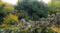 Il Bosco Monumentale del Sasseto vi farà tornare