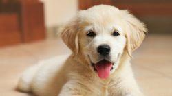 10 segreti per crescere al meglio il tuo cane