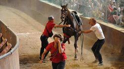 Due cavalli abbattuti alla Giostra dell'Orso di