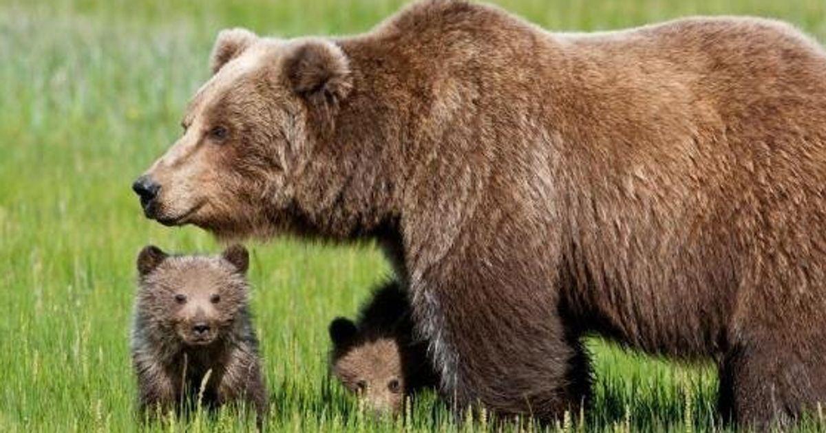 Daniza la figlia dell 39 orsa reclusa a trento da tre anni for Subito it trento arredamento
