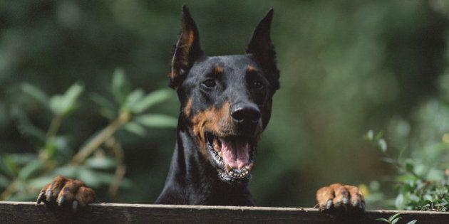 Perseguita i vicini con la registrazione del latrato dei cani. Stalker di 61 anni denunciato e allontanato...