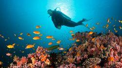 Cresce l'allarme per l'acidificazione degli oceani. Una pesante minaccia per la