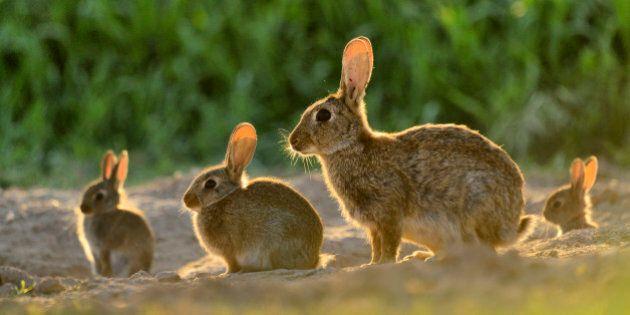 Non dobbiamo fare come i conigli. La rivoluzione sessuale di Papa