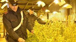 Il passaggio segreto porta al sotterraneo: scoperte 500 piante di marijuana