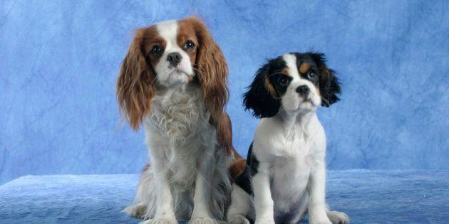 Liposuzione per i cani: la moda delle cliniche Usa. I veterinari: