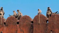 40 professionisti per tenere le scimmie lontane dal Parlamento