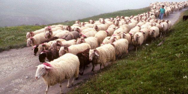 Export, Pecorino supera il Parmigiano. Coldiretti: