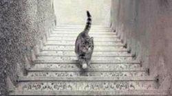 Questo gatto sale o scende le