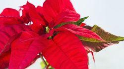 Una Stella di Natale contro leucemie, linfomi e
