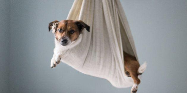 Snuggles: il cane protagonista, nelle insolite vesti di neonato, del servizio fotografico di Jamie Clauss